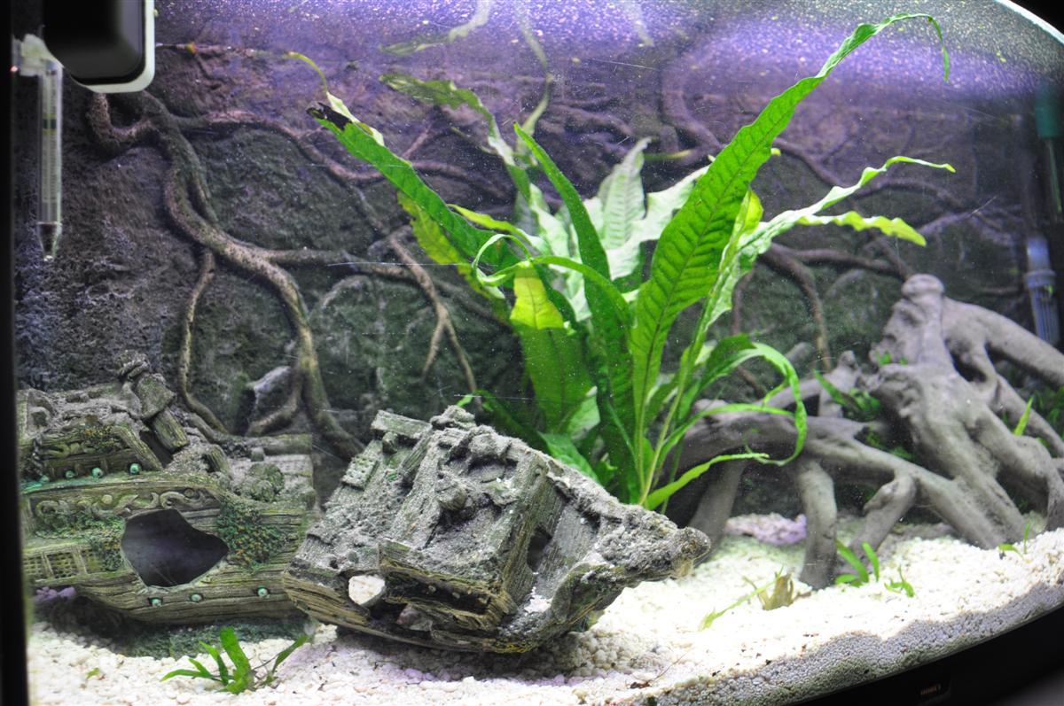 Kogelvis forum  u2022 Toon onderwerp   Nieuw Aquarium 180 Liter